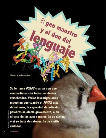 El gen maestro y el don del lenguaje - ¿Cómo ves? - Unam