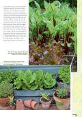 Da haben wir den Salat! - Sperli - Seite 3