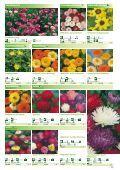 Blumen - Sperli - Seite 2
