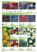 Blumen - Sperli - Seite 3