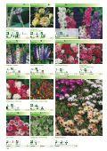 Blumen - Sperli - Seite 5