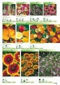 Blumen - Sperli - Seite 6