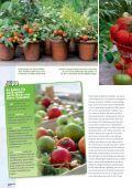 Tomate! - Sperli - Seite 2