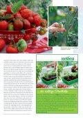 Tomate! - Sperli - Seite 3