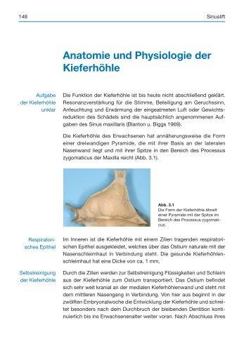 Anatomie und Physiologie der Kieferhöhle - Spitta