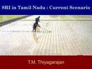 SRI in Tamil Nadu : Current Scenario - SRI - India