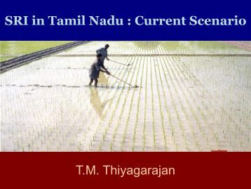 SRI in Tamil Nadu : Current Scenario - SRI - India