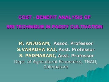 Cost-Benefit Analysis of SRI Technology in Paddy Cult. - SRI - India