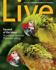 Squawk of the town: Academy receives Platinum rating - California ...