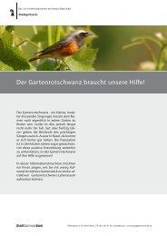 Der Gartenrotschwanz - Stadtgärtnerei - Kanton Basel-Stadt