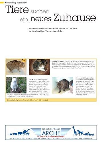 ein neues Zuhause - STADTmagazin