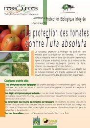 Protection des tomates contre Tuta absoluta - GRAB, Groupe de ...