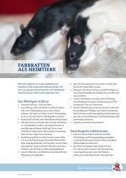 Ratten - Vier Pfoten