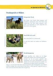 Zurück an VIER PFOTEN – Stiftung für Tierschutz ... - Starke Pfoten