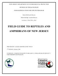 field guide to reptiles and amphibians of new jersey - State of New ...