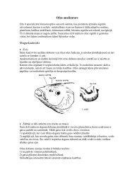 Ozzas analizators 2003.pdf