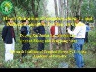 Mixed Plantation of Santalum album L. and - APAFRI-Asia Pacific ...