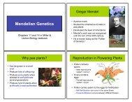 NOTES_Mendelian Genetics 11-12 - nnhsbergbio