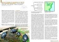 Clemmys guttata - Association du refuge des tortues