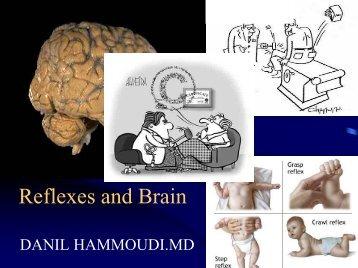 Reflexes and Brain - Sinoe medical homepage.