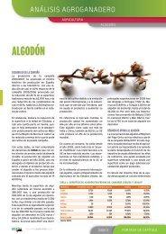 Anuario 2007. Algodón - Coag