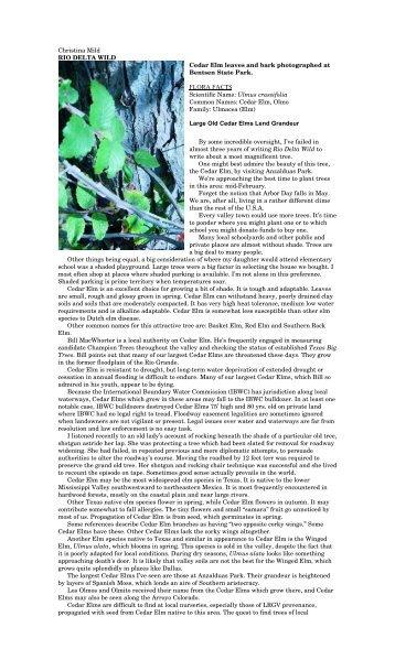 "Ulmus crassifolia - Christina Mild's ""Rio Delta Wild"""