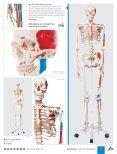 3B Scientific - MEDICAL EDUCATION Catalog - Page 5