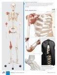 3B Scientific - MEDICAL EDUCATION Catalog - Page 6