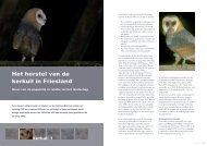 Het herstel van de kerkuil in Friesland - STeenuil Overleg NEderland