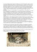 Populatie-onderzoek aan Steenuilen met broedbiologische ... - Page 5