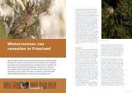 Winterroesten van ransuilen in Friesland - STeenuil Overleg ...