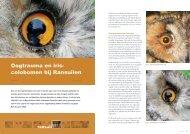 Oogtrauma en iriscoloboom bij Ransuilen