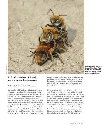 4.13 Wildbienen (Apidae) pannonischer Trockenrasen