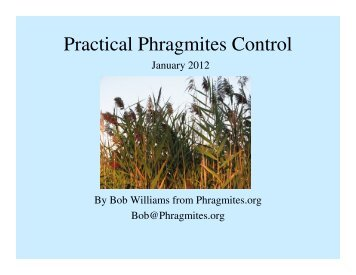 Practical Phragmites Control - Restoring Native Ecosystems
