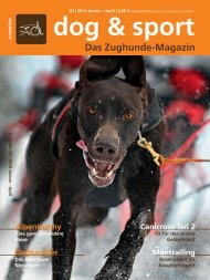 dog & sport