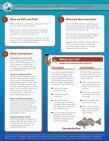 MSRP Fish Identification Card - Fish Contamination Education ... - Page 2