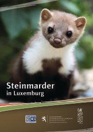 Steinmarder und Katzen - Portail de l'environnement