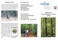 Regelungen für das Sammeln von Pilzen im Wald