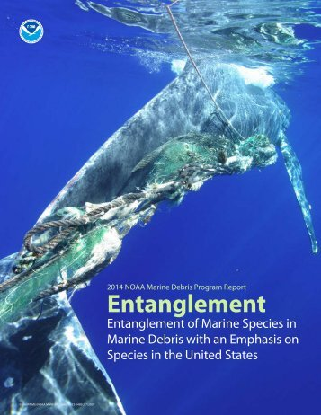 mdp_entanglement_topic_paper
