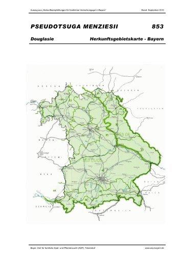 Douglasie - Bayern