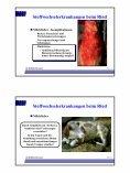 Stoffwechselerkrankungen beim Rind - Page 6