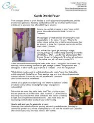 """Add instant glamour with """"Mini Orchids"""" - Garden Media Group"""