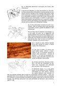 Les abris de Tin Amarasouzi, de Tahountarvat et de ... - StoneWatch - Page 4