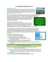 Les fleurs de cyanobactéries sont causées par un apport important ...