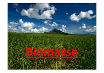 Biomasse - Stromberg-Gymnasium