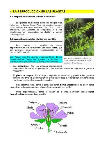 4. LA REPRODUCCIÓN EN LAS PLANTAS - Dolmen de Soto