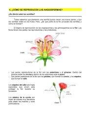 4. ¿cómo se reproducen las angiospermas? - Dolmen de Soto