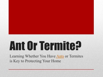 Ant or Termite? Learning Whether You Have Ants or Termites is Key to Protecting Your Home