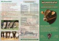 Braunvieh brochure - 3