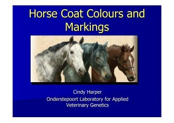 Horse Coat Colours Presentation 2008